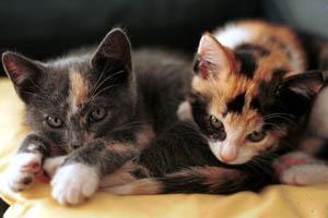Carrie en Jamie als kittens