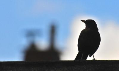 Bird in backlight