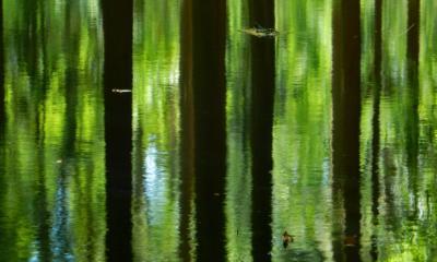 Breda Ulvenhout forest