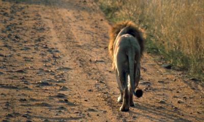 Kenya MasaiMara