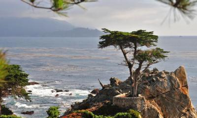 Monterey - The Lone Cypress