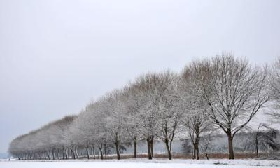 Pijnacker Biesland forest 2
