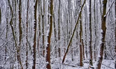 Pijnacker Bieslandse bos
